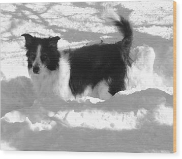 Wood Print featuring the photograph Black And White In The Snow by Michael Porchik