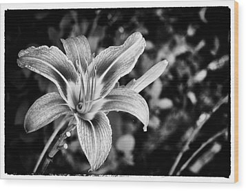 Wood Print featuring the photograph Black And White Lily by Bradley Clay