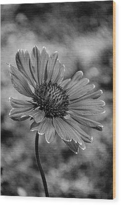 Black And White Love Wood Print
