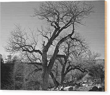 Wood Print featuring the photograph Black And White Oak by Janice Westerberg
