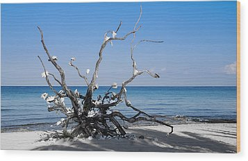 Wood Print featuring the photograph Black And White On Blue by Phil Abrams