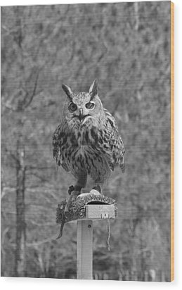Black And White Owl Wood Print by Cherie Haines