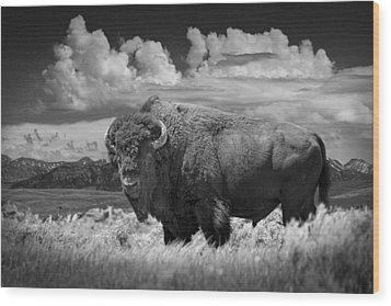 Black And White Photograph Of An American Buffalo Wood Print
