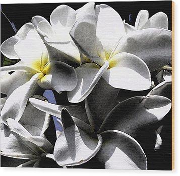 Black And White Plumeria Wood Print