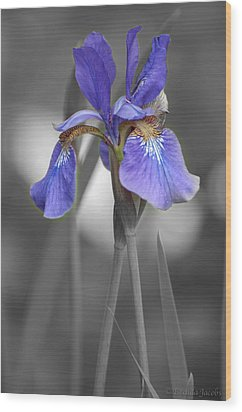Black And White Purple Iris Wood Print by Brenda Jacobs