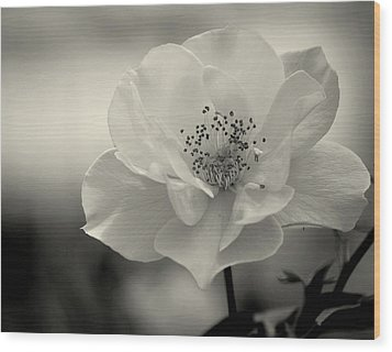 Black And White Rose Wood Print by Amee Cave