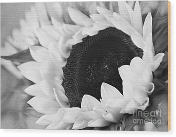 Wood Print featuring the photograph Black And White Sunflower by Eden Baed