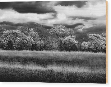 Black And White Trees Wood Print