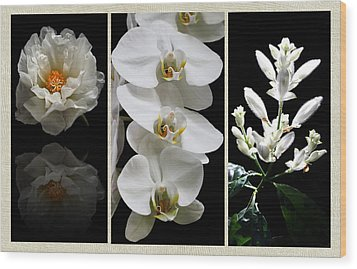 Black And White Triptych Wood Print by Judy Vincent