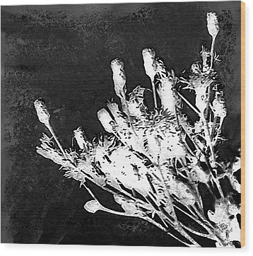 Wood Print featuring the photograph Black And White Wildflower by Shawna Rowe