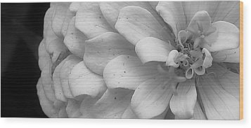 Black And White Zinnia Wood Print by Bruce Bley