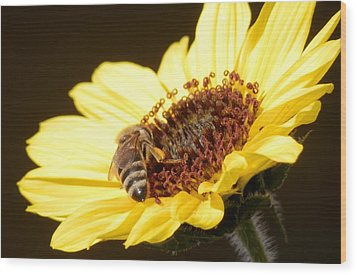 Black And Yellow Bee Beauty Wood Print by Belinda Lee
