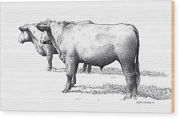 Black Angus Steers On Almshouse Road Wood Print by William Beauchamp