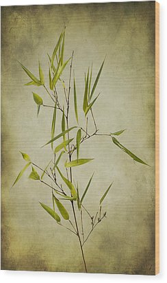 Black Bamboo Stem. Wood Print by Clare Bambers