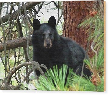 Black Bear 1 Wood Print by Will Borden