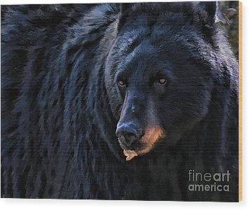 Black Bear Wood Print by Clare VanderVeen