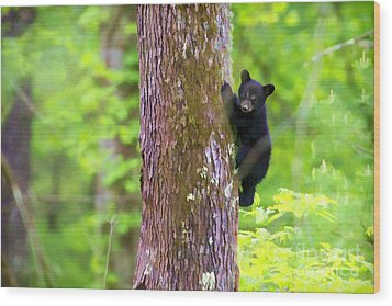 Black Bear Cub In Tree Wood Print by Dan Friend