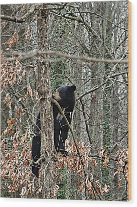Wood Print featuring the photograph Black Bear Cub by William Tanneberger
