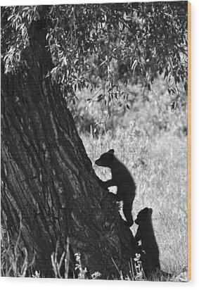 Black Bear Cubs Climbing A Tree Wood Print by Crystal Wightman