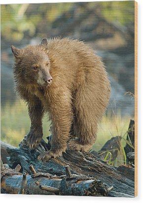 Wood Print featuring the photograph Black Bear by Doug Herr
