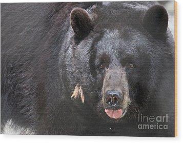 Black Bear Wood Print by Meg Rousher
