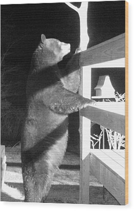 Wood Print featuring the photograph Black Bear by Mim White