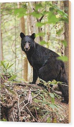 Black Bear Smile Wood Print by Debbie Green