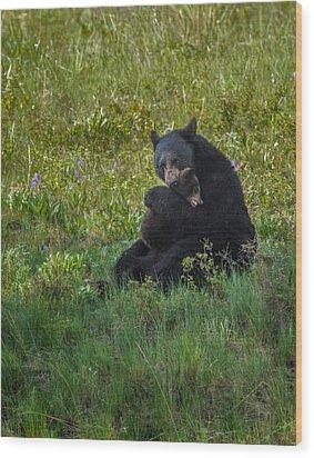 Black Bear Sow Hugging Cub Wood Print