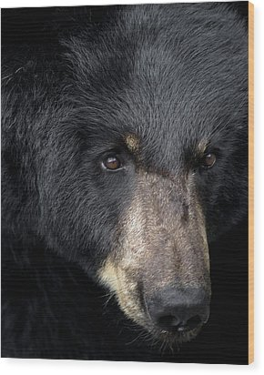 Black Bear Wood Print by TnBackroadsPhotos