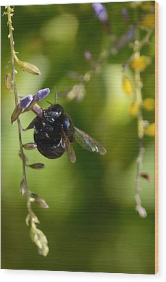 Black Bumblebee Wood Print by Debra Martz