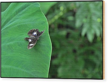 Black Butterfly Wood Print by Achmad Bachtiar