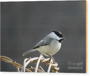 Wood Print featuring the photograph Black-capped Chickadee by Brenda Bostic