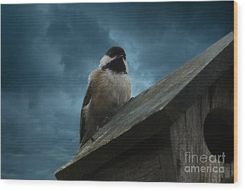 Wood Print featuring the photograph Black-capped Chickadee  by Marjorie Imbeau
