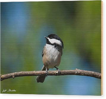 Black Capped Chickadee Perched On A Branch Wood Print by Jeff Goulden