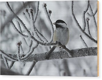 Wood Print featuring the photograph Black-capped Chickadee by Ryan Crouse