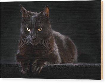Black Cat Wood Print by Dirk Ercken