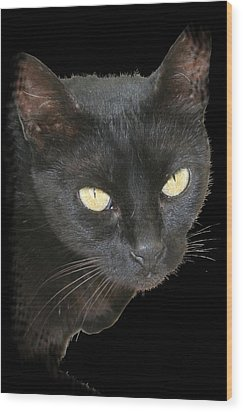 Black Cat Isolated On Black Background Wood Print by Tracey Harrington-Simpson