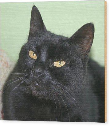 Black Cat Wood Print by Tracey Harrington-Simpson
