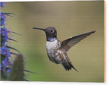Black-chin Humming Bird Wood Print