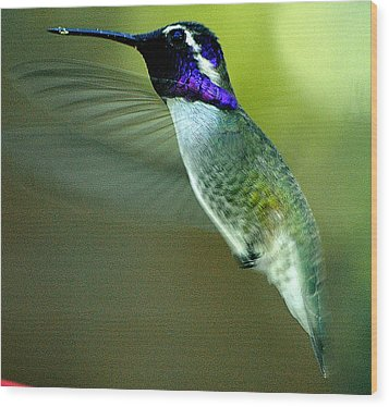 Wood Print featuring the photograph Black Chinned Male In Flight To Feeder by Jay Milo