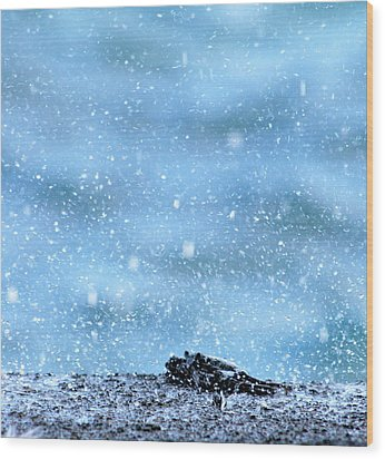 Black Crab In The Blue Ocean Spray Wood Print