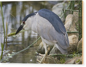 Wood Print featuring the photograph Black-crown Heron Going Fishing by David Millenheft