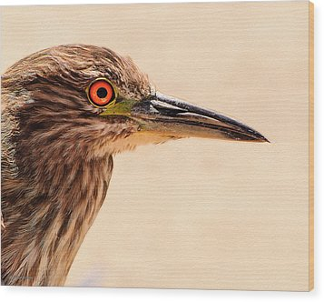 Black Crowned Night Heron 4 Wood Print by Bob and Nadine Johnston