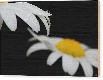 Black Daisy Reflection Wood Print by Lisa Knechtel