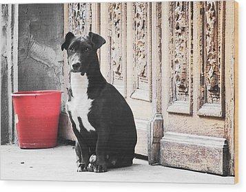 Black Dog Guarding A Vintage Wooden Door Wood Print