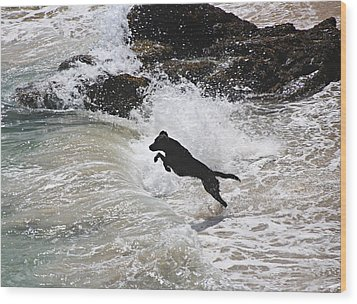 Black Dog Wood Print by Tom Conway