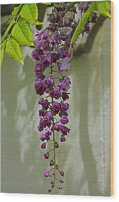 Black Dragon Wisteria Wood Print by Suzanne Stout