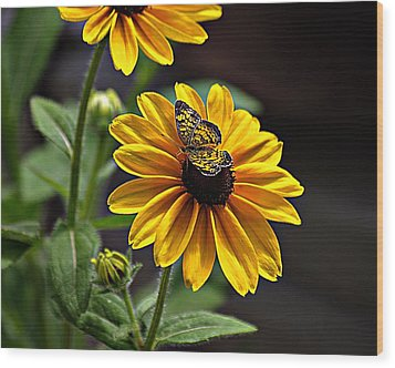 Black-eye Susan With Butterfly Wood Print