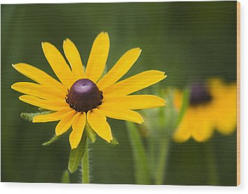 Black Eyed Susan Wood Print by Adam Romanowicz