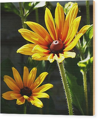 Wood Print featuring the photograph Black Eyed Susan by Al Fritz
